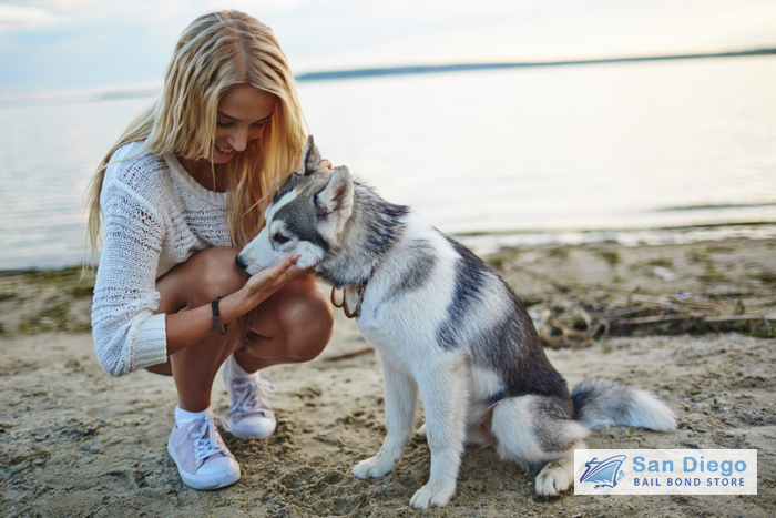 laws-every-california-pet-owner-should-know